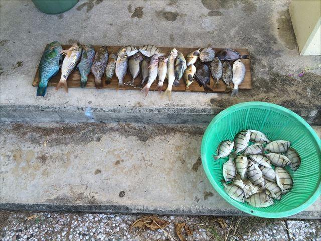 08追い込み漁の成果_R